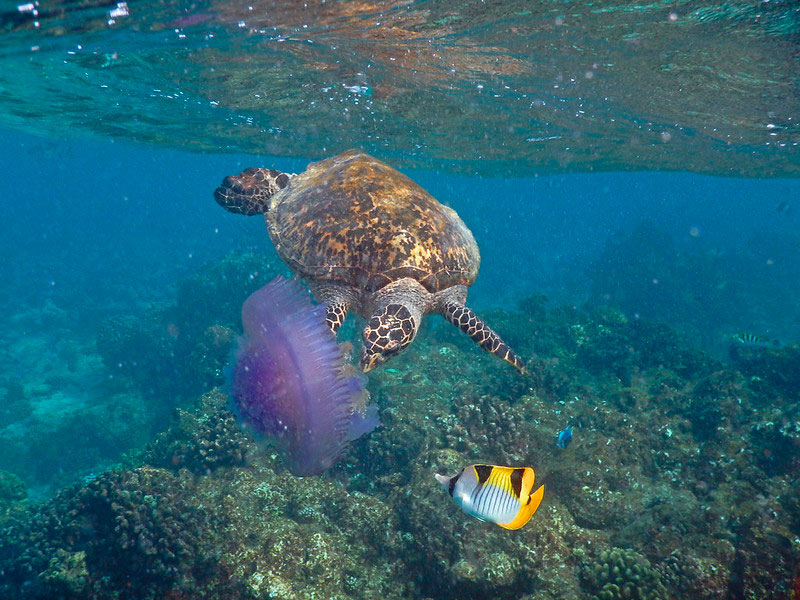 Ellaidhoo-maldivas-isla