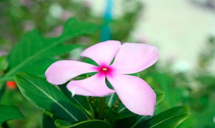 Ukulhas-MALDIVAS-isla
