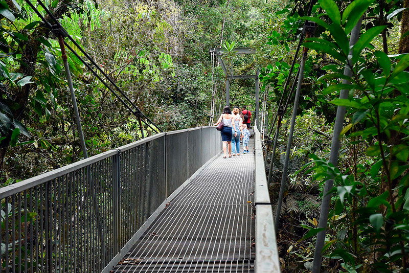 Daintree-National-Park