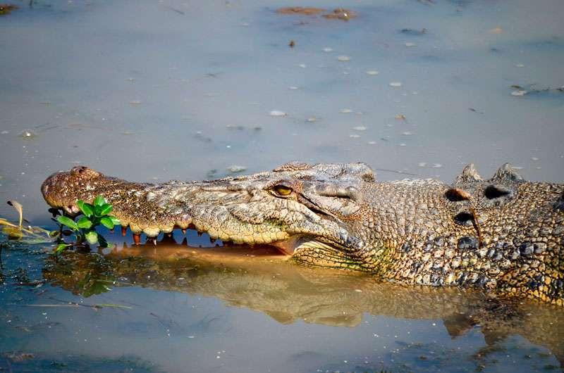 Parque-nacional-Kakadu